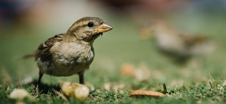 featured_bird
