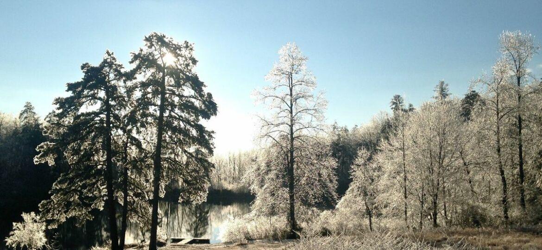 mad_winter